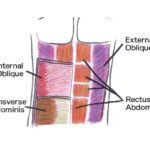 Abdominal Muscles and Great Core Exercises